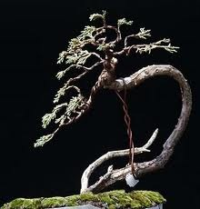 Enjoyable Bonsai Wiring Styles Basic Electronics Wiring Diagram Wiring Cloud Mangdienstapotheekhoekschewaardnl