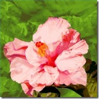 care-double-hibiscus-200X200