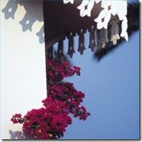 do-bougainvillea-plants-like-shade-200X200
