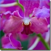 orchid-pests-diseases-1.1-120X120