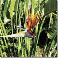 propagation-white-bird-paradise-200X200