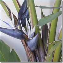 prune-grey-bird-paradise-200X200