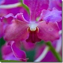 drooping-orchid-flowers-200X200
