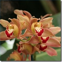 orchid-plant-food-watering-200X200