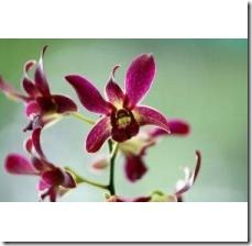 plant-orchid-800X800