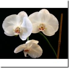 plant-orchid-seeds-800X800