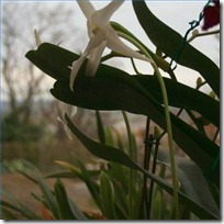 plant-orchids-outside-200X200