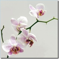 water-orchid-plants-200X200