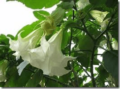 How to care for exotic angel plants for How to take care of exotic angel plants