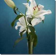 different-colors-flower-lilies-800x800