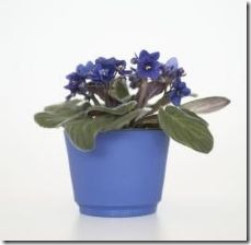 potting-soil-african-violets-800x800