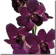 article-page-main_ehow_images_a04_oh_a1_care-of-dendrobium-orchids-800x800