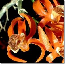 article-page-main_ehow_images_a04_te_0r_use-spa-pot-dendrobium-orchid-800x800