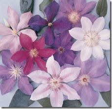 article-page-main_ehow_images_a07_nv_5g_varieties-scarlet-clematis-800x800