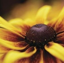 articlepagemain_ehowuk_images_a07_ne_fn_redinsectsconeflowers800x800.jpg