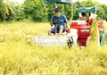 VN to conduct nationwide rural, agriculture survey