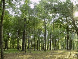 Policies fail to increase forestry investment