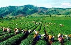 VN, Mexico expand agricultural linkages