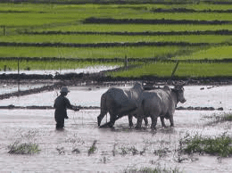 Agriculture in Vietnam gets a boost with new public-private sector project