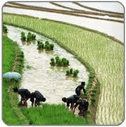 Agricultural projects to receive incentives