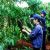 Vietnam's coffee exports fall sharply in July 2011