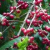 Coffee exports percolate in first half