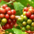 Vietnam's coffee production to rise next year, USDA unit says