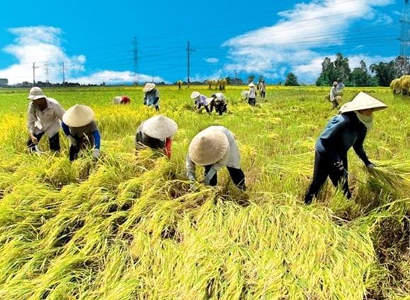 Viet-nam's agriculture in recent years