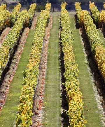 Winegrowers face an 'uncertain' future