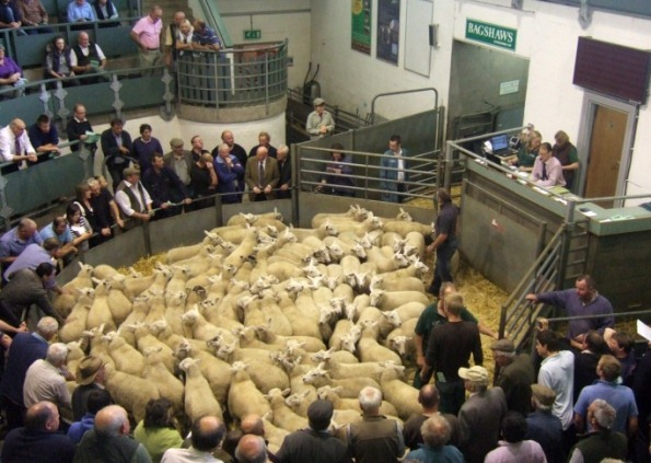 Sale prices give timely lift to lamb sector