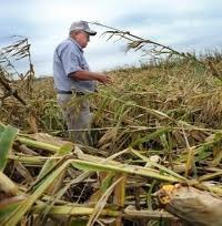 North Carolina crops, livestock battered by Irene