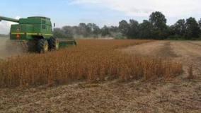 Crop supplies tight, record prices – FAPRI update
