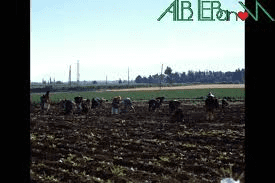 Agriculture Association protests in Bekaa against lack of govt support