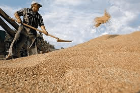 Russia grains optimism wanes, as German fears rise