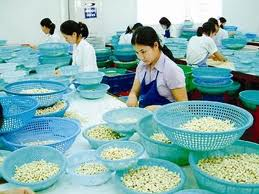 Cashew nuts processing companies in need for help