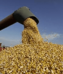 Morning markets: crop prices build on US yield fears