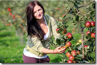 Paulina Tinkla picks 'Katy' cider apples  at a Thatchers cider orchard in Sandford, Somerset. See SWNS story SWCIDER: Autumn is already underway in cider country it was revealed with 150,000 tonnes of apples set to be pressed in the next ten weeks. Nearly half of all the apples grown in the UK are used to make cider many thousands of acres of new orchards have been planted in the last 15 years to keep pace with the increasing demand for the drink. Gabe Cook, spokesman for the National Association of Cider Makers (NACM) said this year's harvest is early but that was always an encourgaing sign for those in the industry.