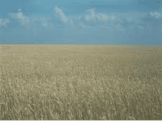 Kazakhstan's grain production up 60%