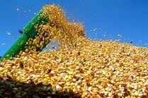 Huge Chinese corn order confirmed, but prices ease