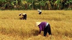 Agricultural imports rise 23 percent