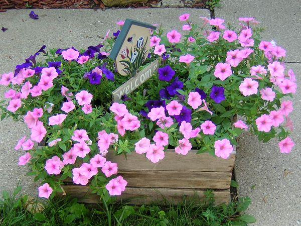 Cant-Kill-Petunias